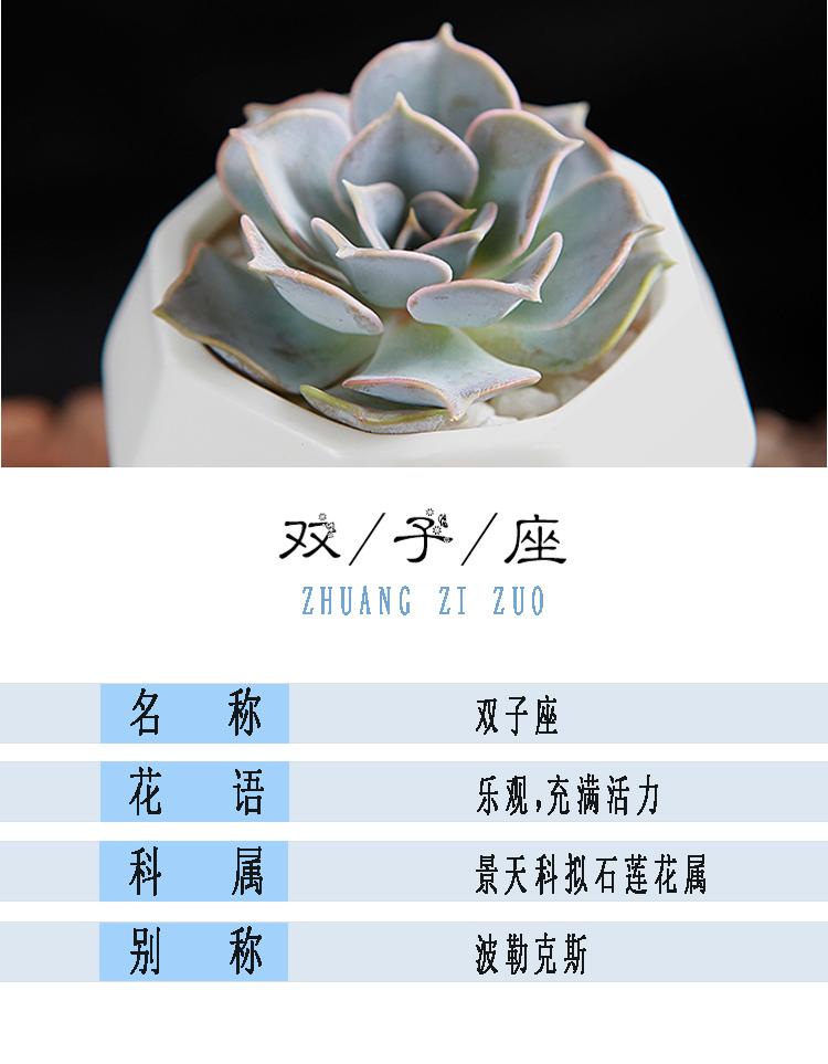 双子座 - 西部最大的花卉平台--花开半岛